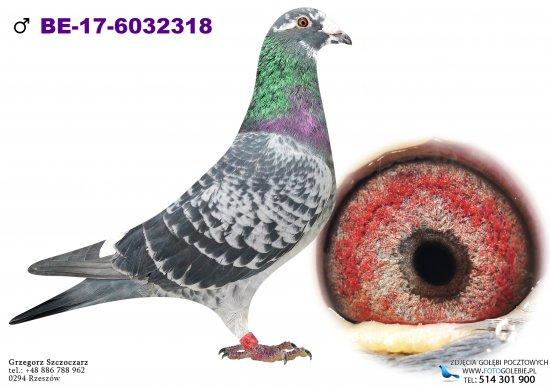 BE-17-6032318