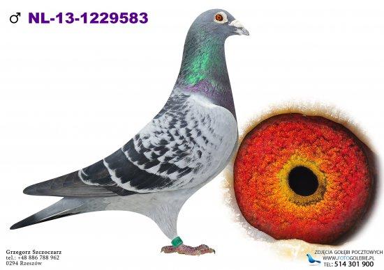 NL-13-1229583 - oryg. Sakis Minovgioudis
