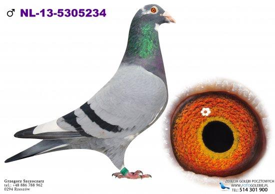 NL-13-5305234 oryg. P. Veenstra