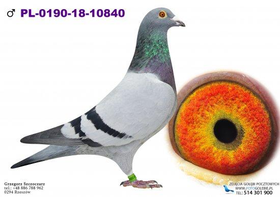 PL-0190-18-10840 - oryg. Supergolab.pl