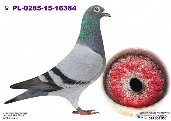 PL-0285-15-16384