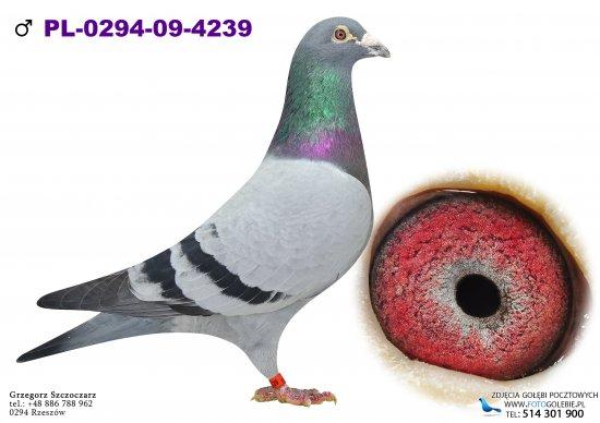 PL-0294-09-4239