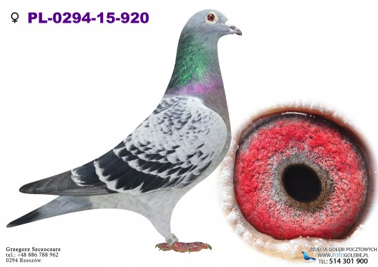 PL-0294-15-920