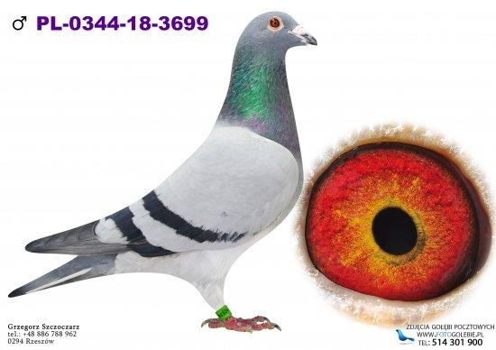 PL-0344-18-3699
